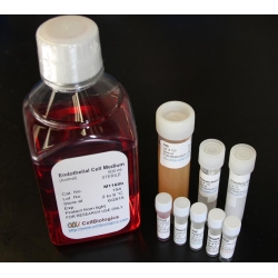 Complete Mesenchymal Stem Cell Medium