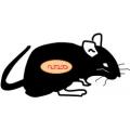 Lewis Rat Cells