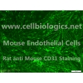 C57BL/6-GFP Mouse Primary Retinal Microvascular Endothelial Cells